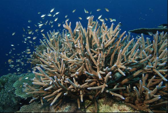 Spratly nature Swallow Reef Layang Layang (Albert Kok on Flickr)